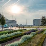 dakpark-rotterdam